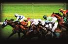 horse racing pool betting